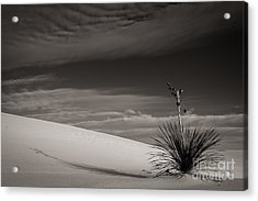 Yucca In The Sandsiii Acrylic Print by Sherry Davis