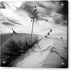 Yucca In White Sand Acrylic Print by Allen Biedrzycki