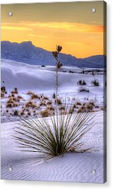 Acrylic Print featuring the photograph Yucca On White Sand by Kristal Kraft