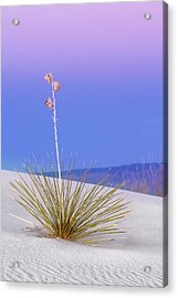 Acrylic Print featuring the photograph Yucca Pink And Blue by Kristal Kraft