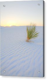 Acrylic Print featuring the photograph Yucca Plant At White Sands by Alan Vance Ley