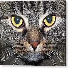 Yummy Cat Eyes Acrylic Print