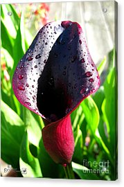 Acrylic Print featuring the photograph Zantedeschia Named Black Forest by J McCombie