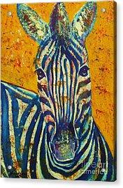 Zebra Acrylic Print by Anastasis  Anastasi