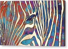 Zebra Art - 1 Stylised Drawing Art Poster Acrylic Print
