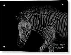 Zebra Art Acrylic Print