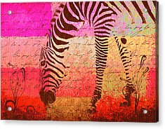 Zebra Art - T1cv2blinb Acrylic Print by Variance Collections