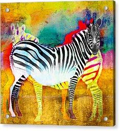 Zebra Colors Of Africa Acrylic Print