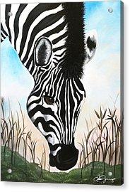 Zebra Acrylic Print by Dani Abbott