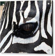 Zebra Eye Acrylic Print by Linda Sannuti
