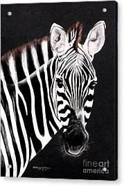 Zebra Facing Right Acrylic Print