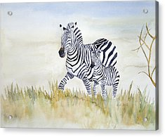 Zebra Family Acrylic Print by Laurel Best