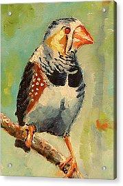 Zebra Finch Acrylic Print