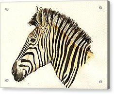 Zebra Head Study Acrylic Print by Juan  Bosco