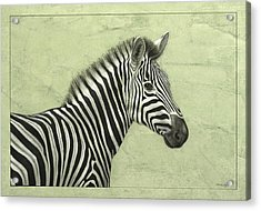 Zebra Acrylic Print by James W Johnson