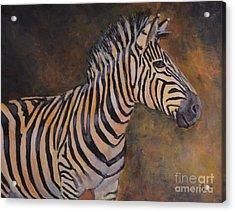 Zebra Acrylic Print by Jana Baker