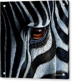 Zebra Acrylic Print by Jurek Zamoyski