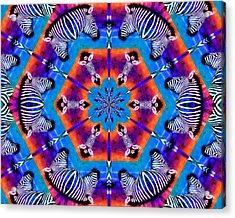 Zebra Kaleidoscope Acrylic Print