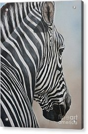 Zebra Look Acrylic Print by Charlotte Yealey