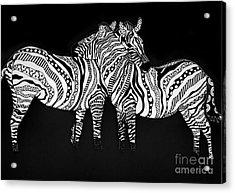 Zebra Love 1 Acrylic Print by Karen Larter