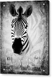Zebra Profile In Bw Acrylic Print by Ronel Broderick