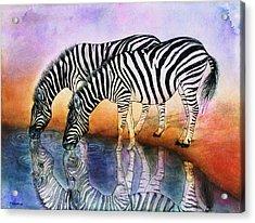 Zebra Reflections Acrylic Print