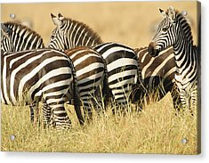 Acrylic Print featuring the photograph Zebra Stripes by Phyllis Peterson