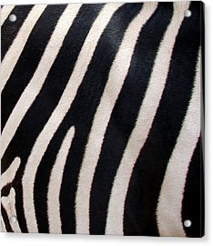Acrylic Print featuring the photograph Zebra Stripes by Ramona Johnston