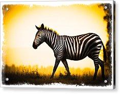 Zebra Sunset Acrylic Print by Mike Gaudaur