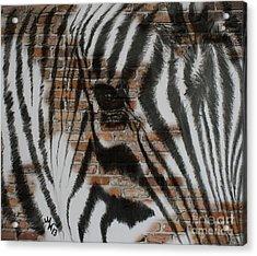 Zebra Wall Acrylic Print
