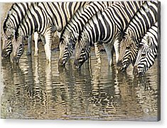 Acrylic Print featuring the photograph Zebras At Water Hole by Dennis Cox WorldViews