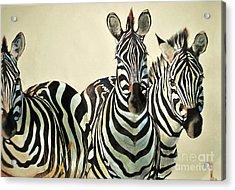 Acrylic Print featuring the drawing Zebras Drawing by Maja Sokolowska