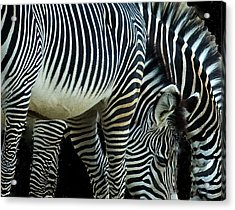 Acrylic Print featuring the photograph Zebras by Mae Wertz