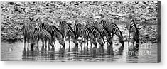 Acrylic Print featuring the photograph Zebras On A Waterhole by Juergen Klust