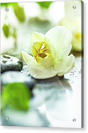 Zen Orchid Acrylic Print by #name?