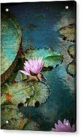 Zen Water Lily Acrylic Print