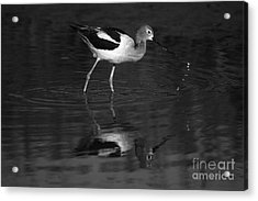 Acrylic Print featuring the photograph Zen Waterdrops  by John F Tsumas