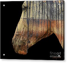 Zeniah Variation 1 Acrylic Print by Judy Wood
