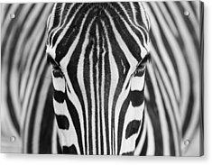 Zepra Acrylic Print by Hesham Alhumaid