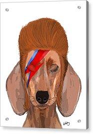 Ziggy Aladdin Sane Dog Acrylic Print by Kelly McLaughlan