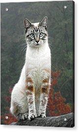 Zing The Cat Acrylic Print