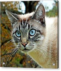 Zing The Cat Upclose Acrylic Print