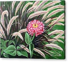 Zinnia Among The Grasses Acrylic Print