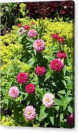 Acrylic Print featuring the photograph Zinnia Garden by Ellen Tully