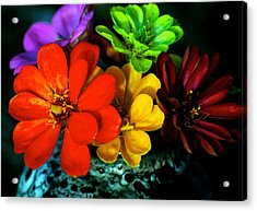 Acrylic Print featuring the photograph Zinnias by Lehua Pekelo-Stearns