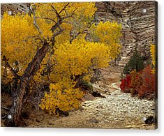 Zion National Park Autumn Acrylic Print by Leland D Howard