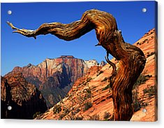 Zion's West Temple View Acrylic Print by Daniel Woodrum