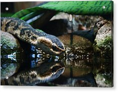 Acrylic Print featuring the photograph Zoo 039 by Andy Lawless