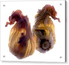 Zucchini Blossom Duo Acrylic Print