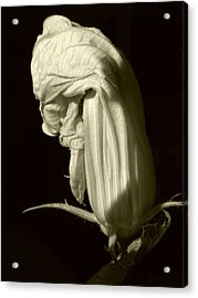 Zucchini Flower Acrylic Print